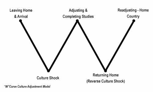 "Image of the ""W"" curve culture adjustment model"